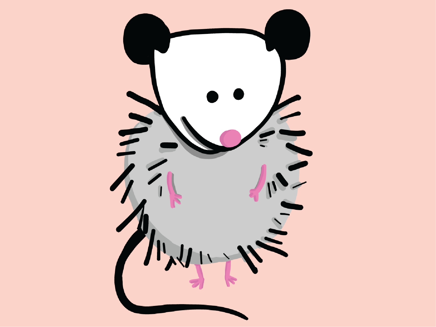 Illustration of a cute possum